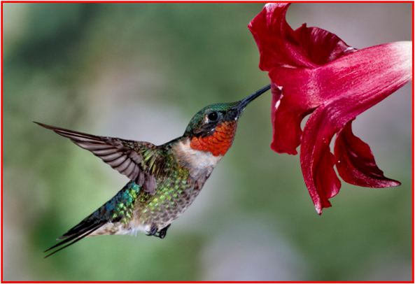 Image result for images for hummingbirds